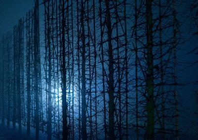 frost_nebel_-1777_24977681518_o