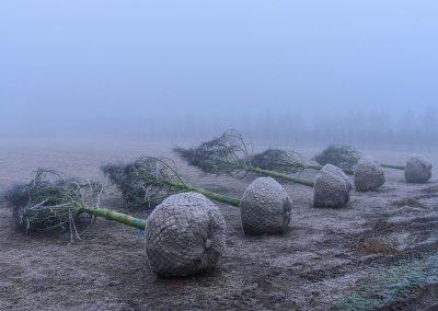 frost_nebel_-1864_24977736418_o