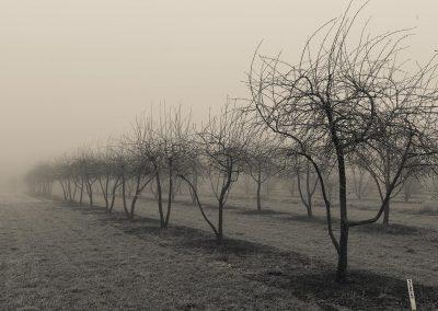 frost_nebel_-1894_38850441181_o