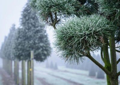 frost_nebel_-1915_38818972912_o