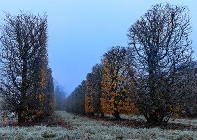 frost_nebel_-1822_38134349434_o