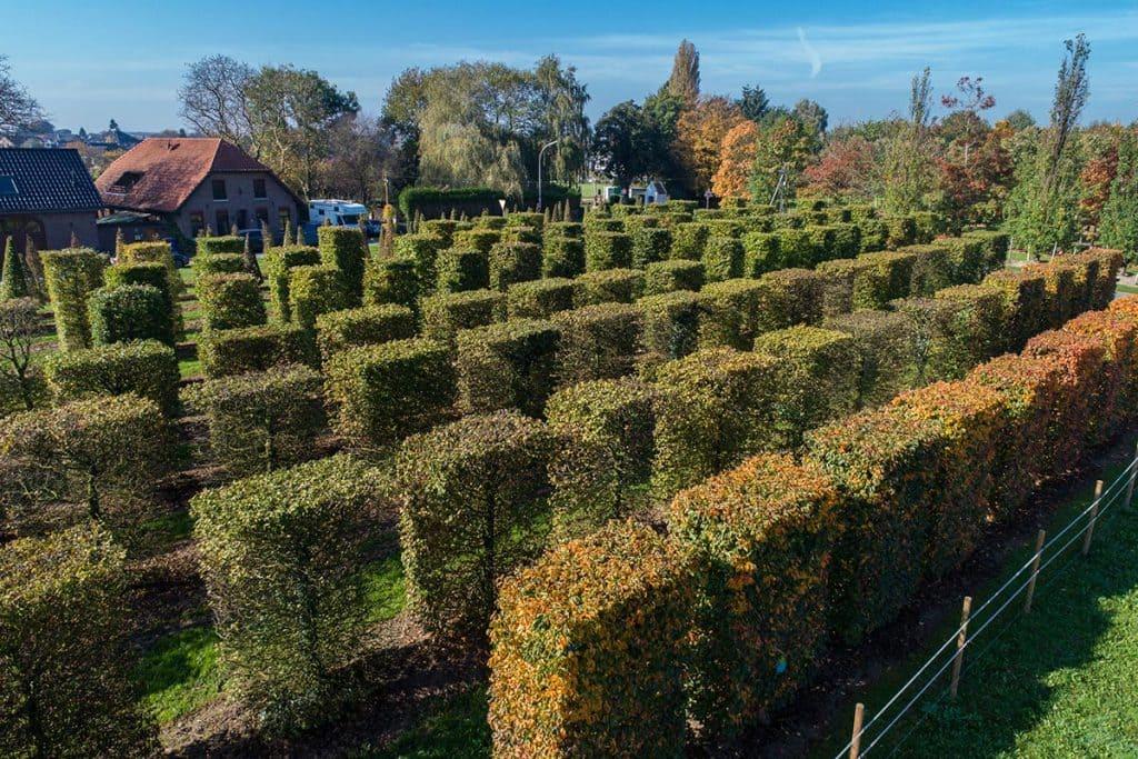 Heckenelemente-KÖNIGS-Herbst-Drohne